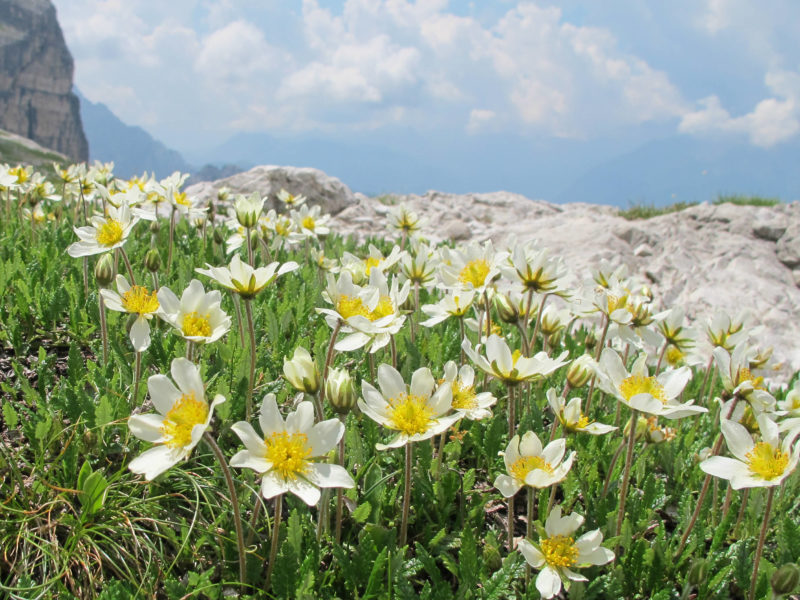 bloem 3 bergen - 800x600